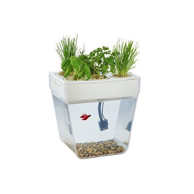 Набор для выращивания растений и ухода за рыбкой Акваферма